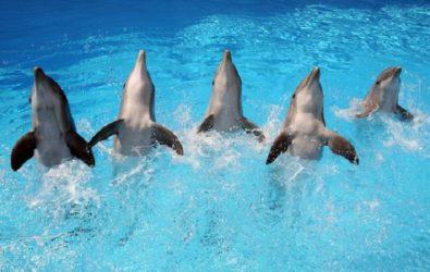 attrazioni zoomarine delfini