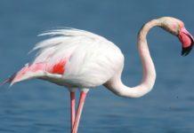 attrazioni zoomarine i laghetti degli uccelli acquatici