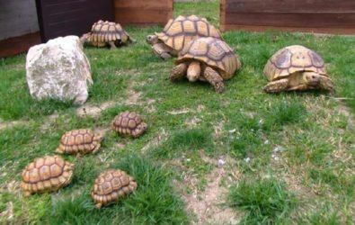 oasi delle tartarughe attrazioni zoomarine