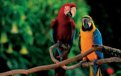 spettacoli zoomarine la foresta dei pappagalli