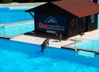zoomarine 2017 apertura 1 aprile