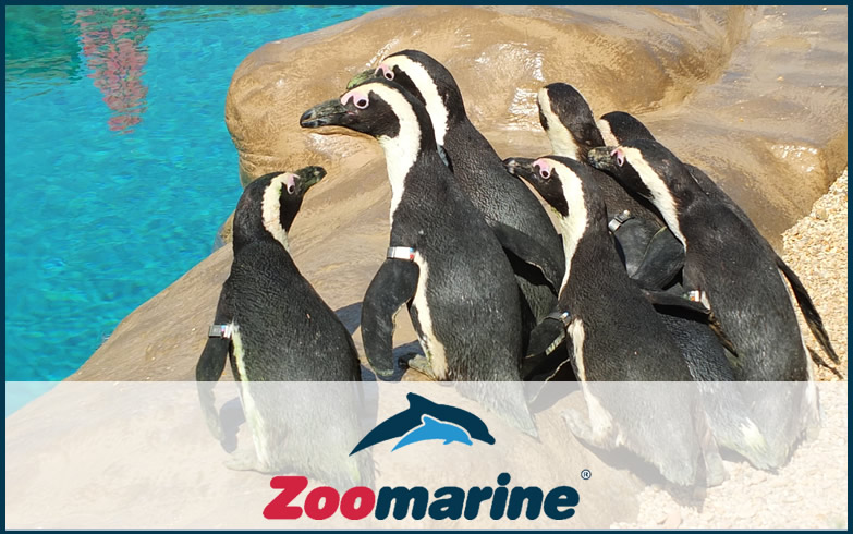 zoomarine, guida turistica online