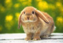accarezziamo i coniglietti