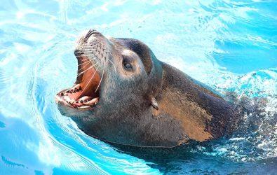 zoomarine feeding pinnipedi