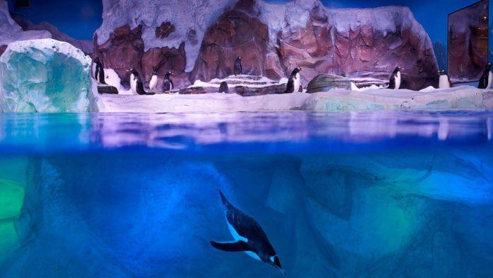 Penguin Bay Talks