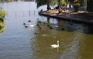 herastrau_park_bucharest_879050