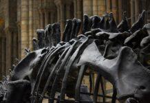 Museo di Storia Naturale Londra, Guida turistica online