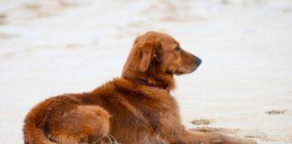 In vacanza con Fido: le spiagge dove divertirvi e prendere il sole con il vostro amico quattrozampe